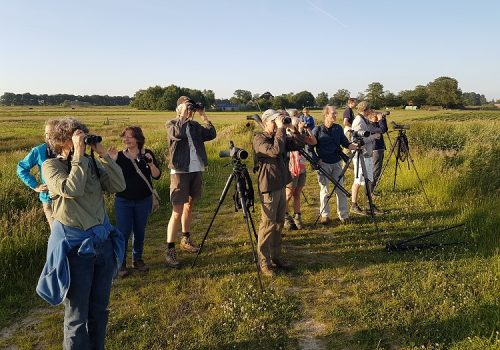 Natuurpresentaties - Groen & Doen ecologie moerasvogels_160606
